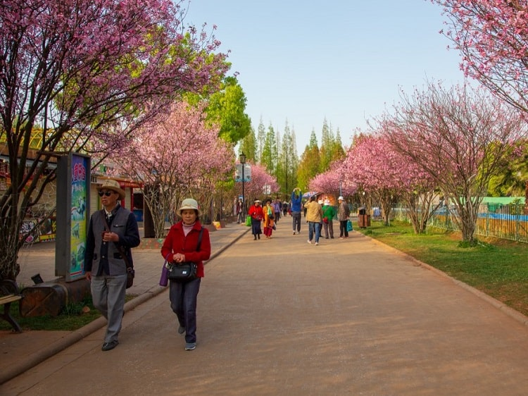 Chinese people walking in the spring