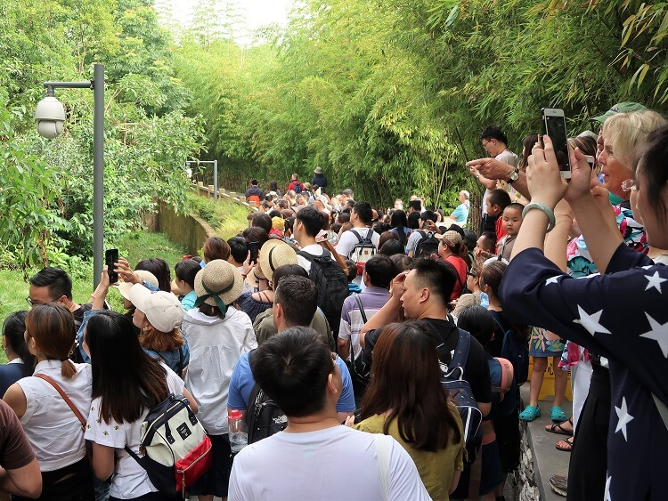 Crowds at Chengdu Panda Sanctuary